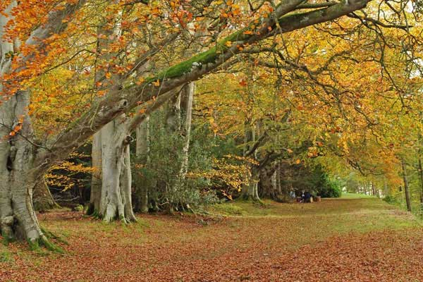 Autumn leaves at Lowther Castle & Gardens