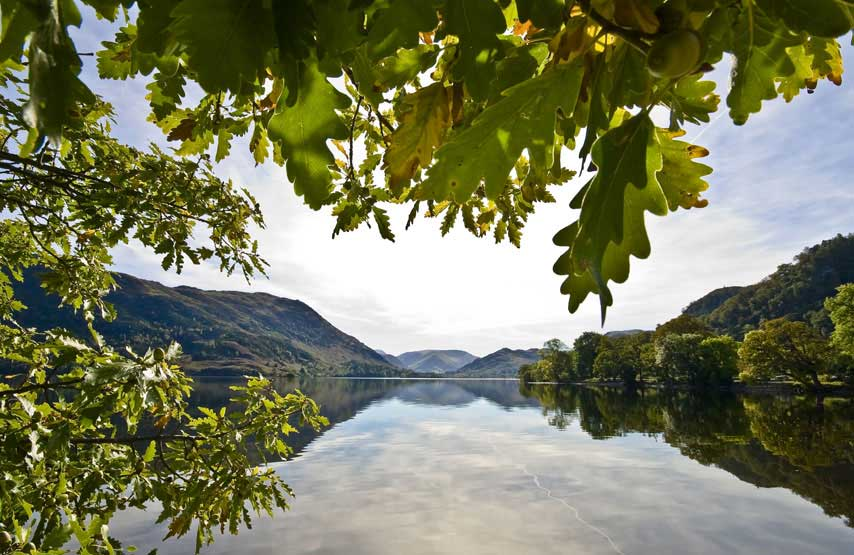 Oak trees at Glencoyne Bay on Ullswater. Photo credit: Cumbria Tourism Library