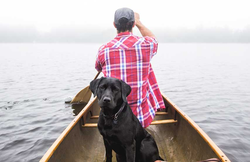 Black labrador exploring Ullswater by canoe with its human
