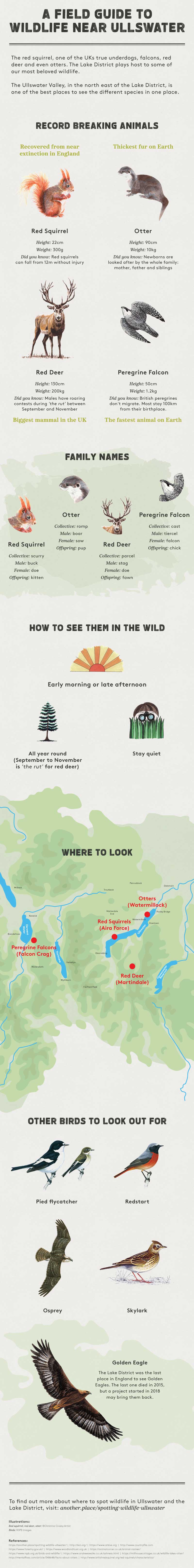 Guide to wildlife in Ullswater - Another Place wildlife infographic
