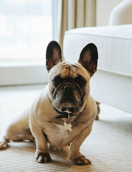 Dog friendly hotel bedrooms
