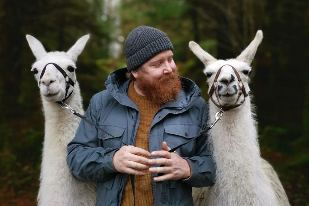 Alpaca's at Whinlatter