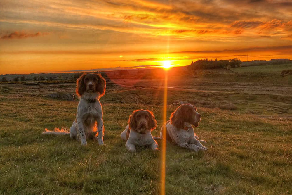 Max, Paddy and Harry enjoying a sunset