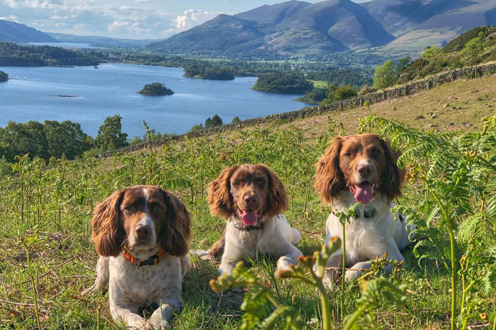 Max, Paddy and Harry above Ullswater