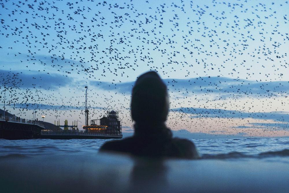 Joe Minihane floats in the sea as a flock of birds take to the sky
