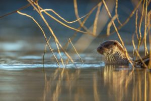 Wildlife that walks on water